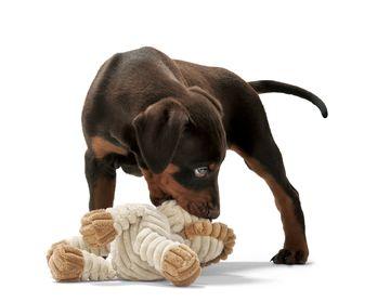 jouets pour chiens. Black Bedroom Furniture Sets. Home Design Ideas