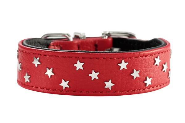 dad75b94b552 Sellerie pour chien  collier, harnais, laisse en cuir, corde, nylon ...