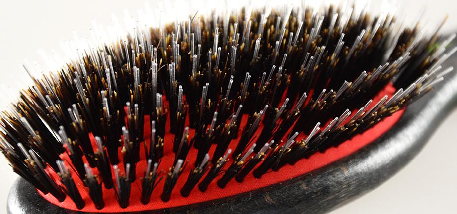 brosse de lustrage pour chien Dux sanglier-nylon