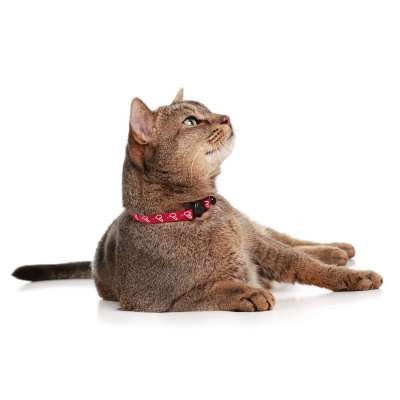collier pour chat hunter