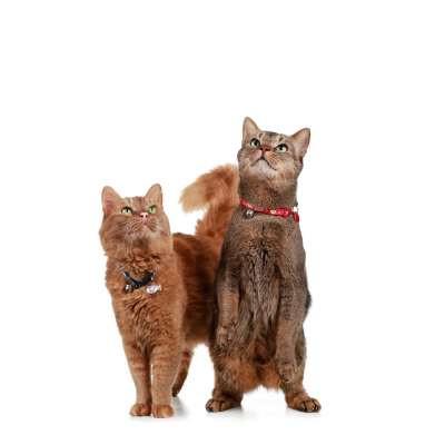 collier pour chat hunter krokom