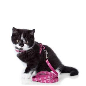 harnais chat chaton hunter by laura